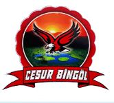 Cesur Bingol